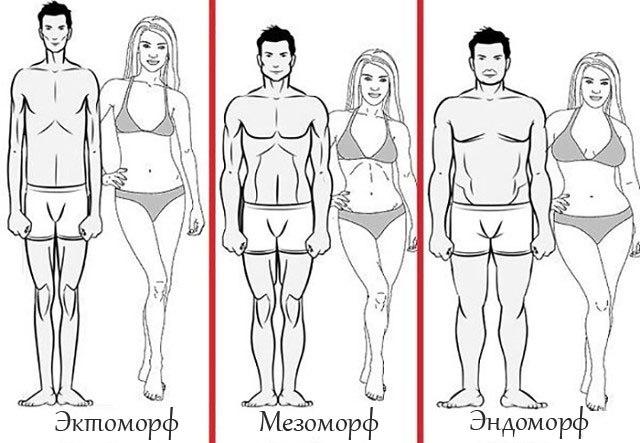 Типы человеческого телосложения